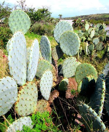Ogród Botaniczny El Charco del Ingenio: cactus
