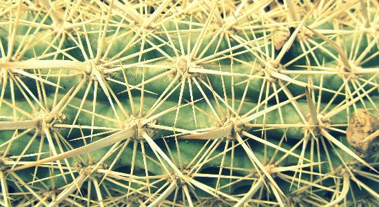 El Charco del Ingenio: cactus