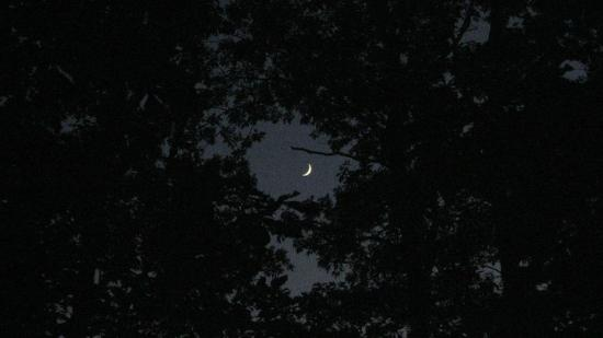 Mulberry, AR: The moon through the trees seen from our campsite