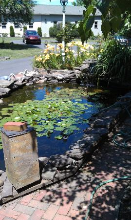 Salem Creekside Inn: fishpond