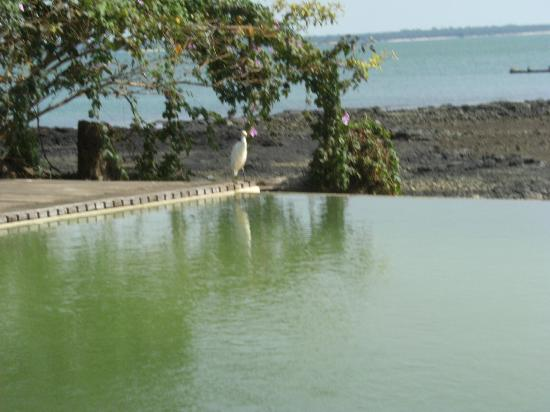 Hotel Lodge Ponta-Anchaca: La piscine à débordement