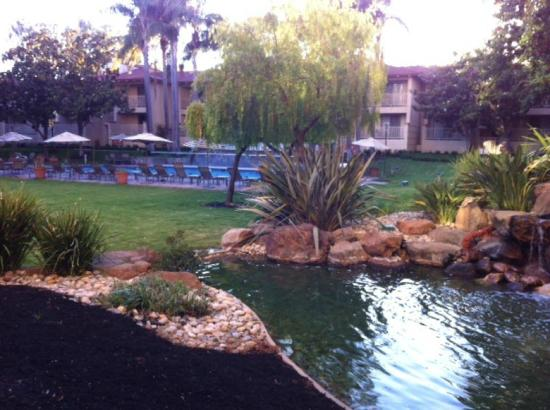 Sheraton San Jose Hotel: The courtyard garden area with pool, jacuzzi, koi pond, waterfall.