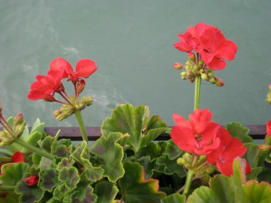 Pensione La Calcina: The geraniums on the breakfast terrace