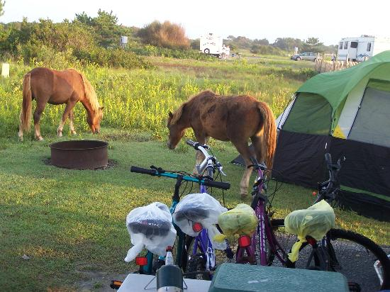 Assateague State Park Camping: Woke up to ponies outside the RV
