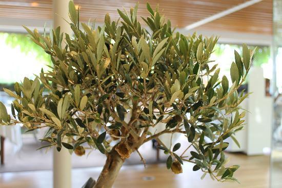 El Celler de Can Roca Appetizer (caramelized olives) & Appetizer (caramelized olives) - Picture of El Celler de Can Roca ...
