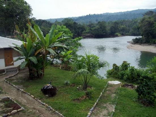 Banana Lodge: The River Napo