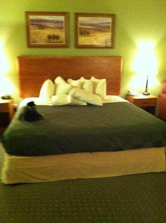 AmericInn Lodge & Suites Havre: KING BED
