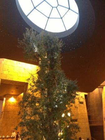 Babel: Olive Tree and Sky Dome