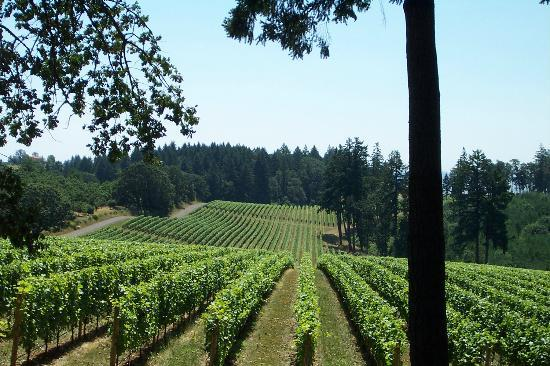 Dayton, OR: Vista Hills vineyards