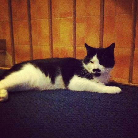 Chelsea Pines Inn: Charlie Chaplin the cat