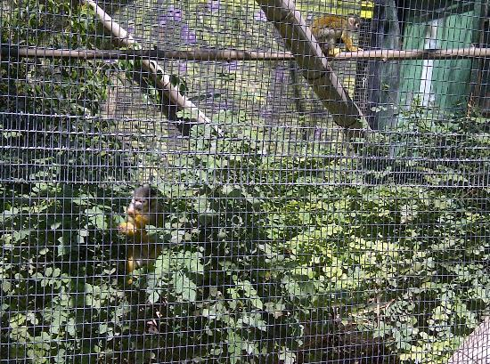 Santa Ana Zoo at Prentice Park : More cages