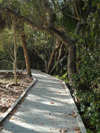Matanzas Pass Preserve: Pathway