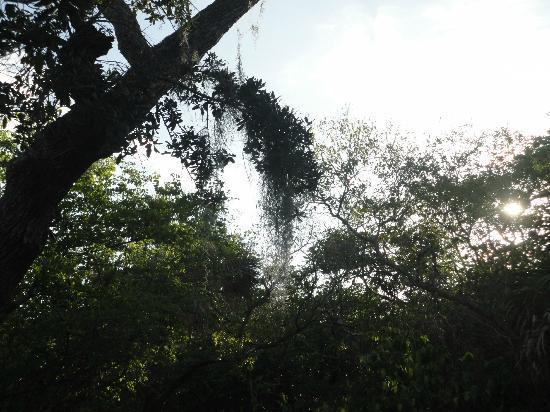 Matanzas Pass Preserve: Moss