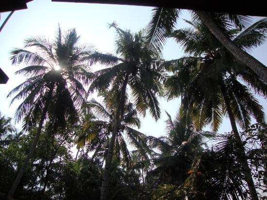 Osborne Resort Goa : My view