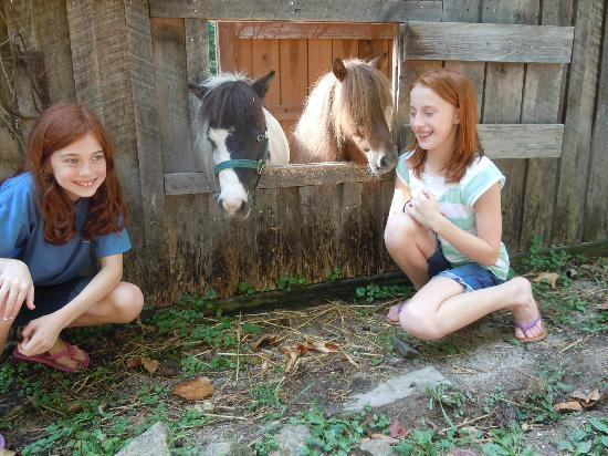 Robinwood Inn: These sweet mini horses were right behind our cabin...so fun!