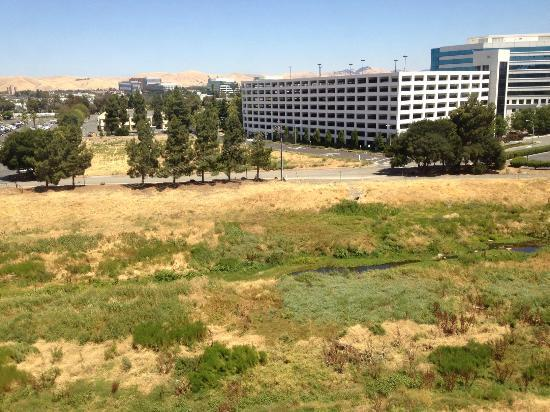 Hilton Concord: The field that our room looked out on.