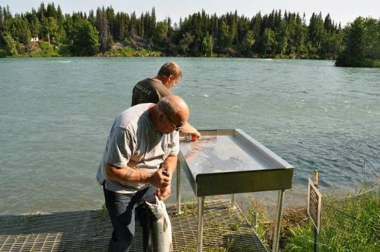 Bob's Cabin & Guide Service: Fish cleaning station at the Cabin