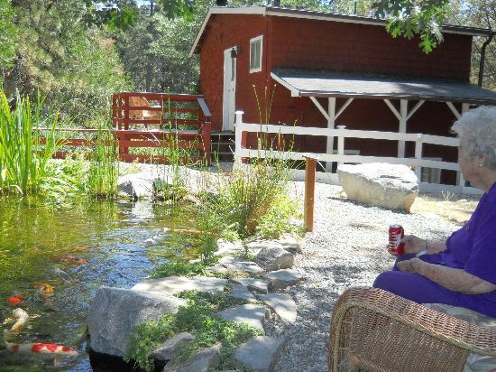 Silver Pines Lodge: Sitting by the pond