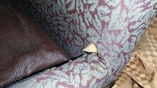 Comfort Suites : Ripped up couch. Looked like a cat had been at it on the other side.