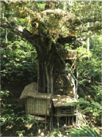 Shola Periyar Tree House: getlstd_property_photo
