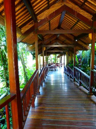 Natura Resort and Spa : Passerelle dans la forêt