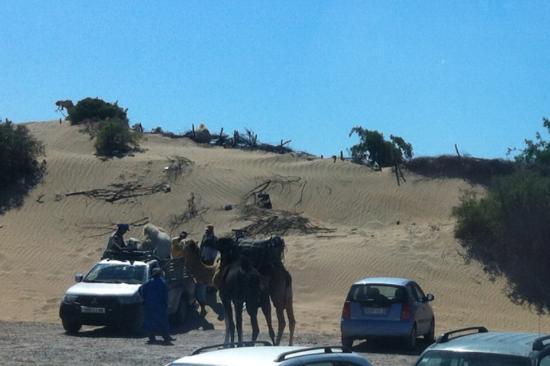 Essaouira Beach: les dromadaires