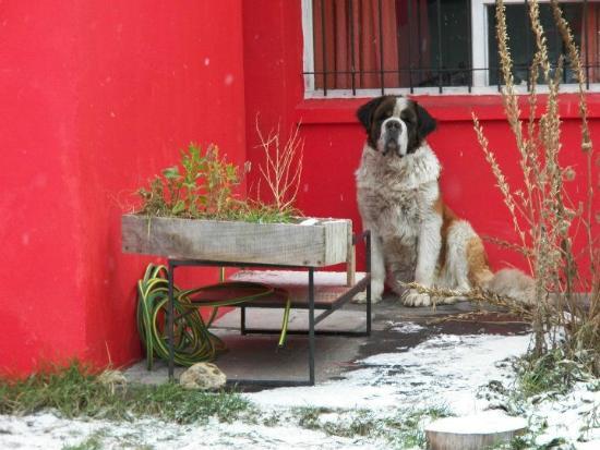 The House Hostel, Resto & Bar: Jack y la nieve