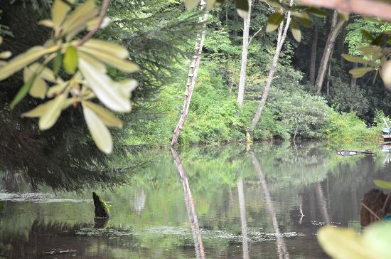 Streams and Dreams : Lake