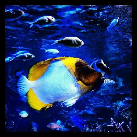 お魚になったワタシ - Picture of Toba Aquarium, Toba - TripAdvisor