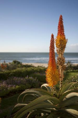 On the Beach Guesthouse, B&B, Suites: Beautiful garden with private access to the beach