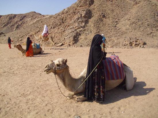 Camel Ride In Desert Picture Of Eastern Arabian Desert