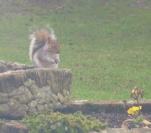 Copsewood House: Garden visitor