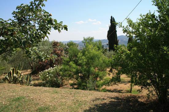 Il Mulino delle Canutole: garden
