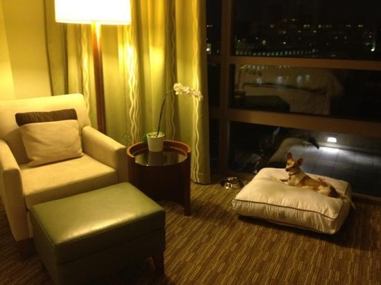 Westin Tampa Bay: our pup definitely enjoyed his stay