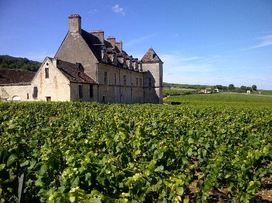 Famous vineyard of Clos de Vougeot in Burgundy.