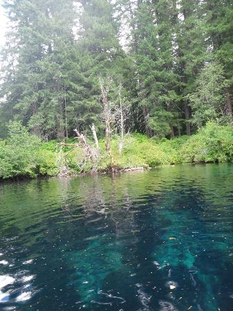 Clear Lake showing blue water, lava and forest