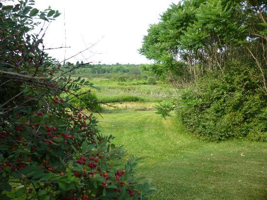 Blue Skye Farm: Back lawn