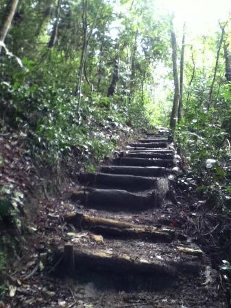 Abraao Cove: camino a la cascada