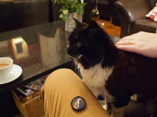 The Clontarf Hotel: Coaxable hotel cat