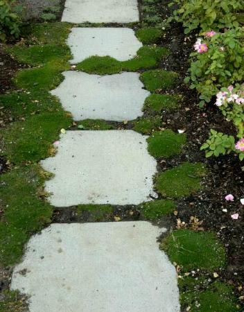 Allison Inn & Spa: Moss-lined and rose edged path from the patio