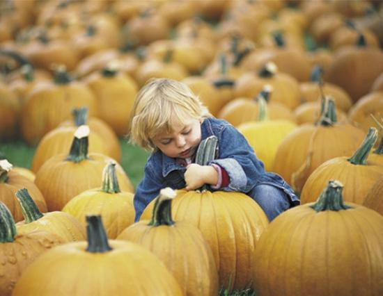 Papa's Pumpkin Patch: Acres of pumpkins and family fun!