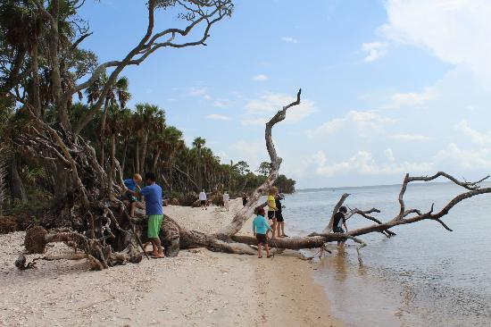 Apalachicola Maritime Museum: Excursions to pristine barrier islands