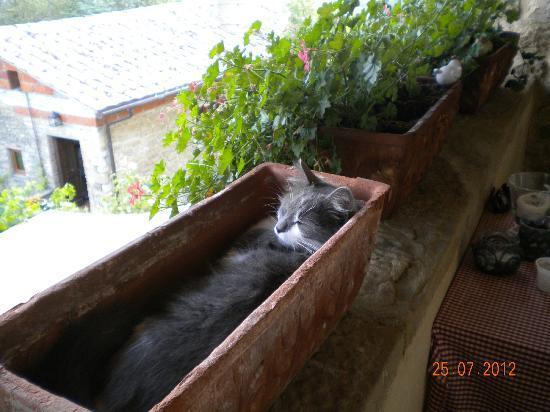 Casa Spertaglia: Family cat taking a siesta