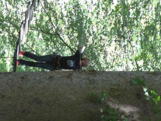 Seilpark Interlaken: up in the trees