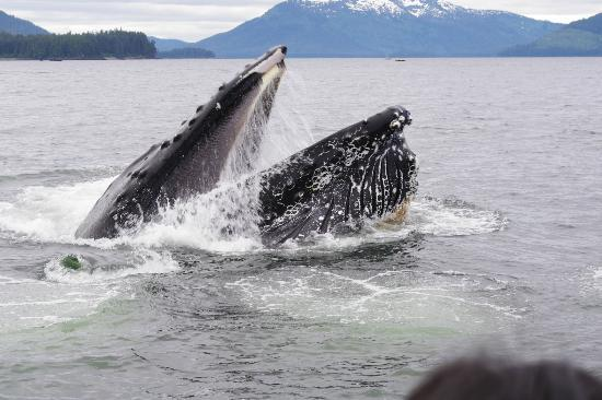 Hoonah Travel Adventures: right on our face!