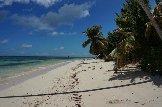 Desroches Island: Shoreline