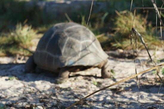 Desroches Island: Wildlife