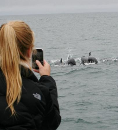 Whale Watching Reykjavik - Special Tours: Up close!