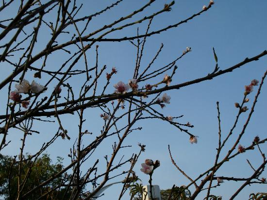 ถงกวน, จีน: clear skies and blossom in December