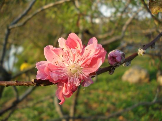 Dongguan, China: Blossom in December